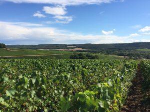 Parcelle de vigne « Côte Bricard »